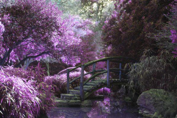 psychoterapia a uprawianie ogrodu